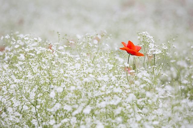założenie ogrodu warszawa