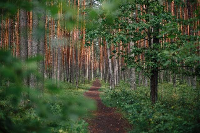 Ścieżki przyrodnicze
